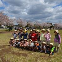Kinderクラスと桜